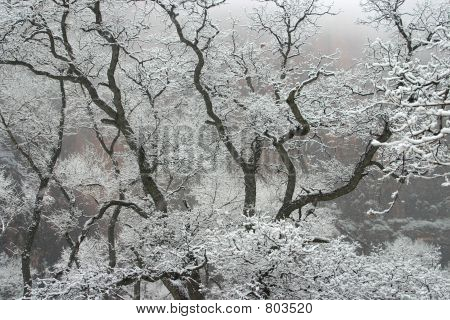 Wintry Trees in Zion National Park