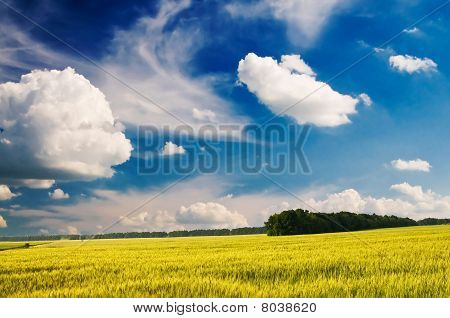 Splendid Landscape Of Green Field.
