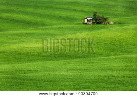 Green field waves with hut, South Moravia, Czech Republic