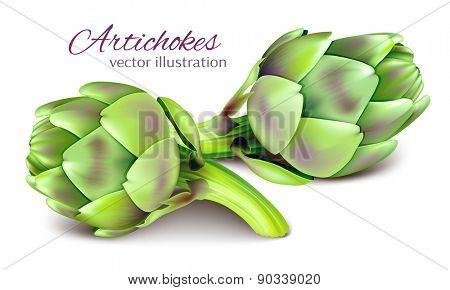 Artichokes. Vector illustration.