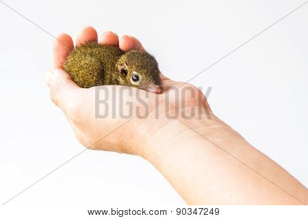 Young Squirrel Holding On Hand.