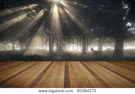 poster of Red deer stag illuminated by sun beams through forest landscape on foggy Autumn Fall morning with wooden planks floor
