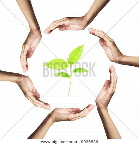 green plant surrounded by hands