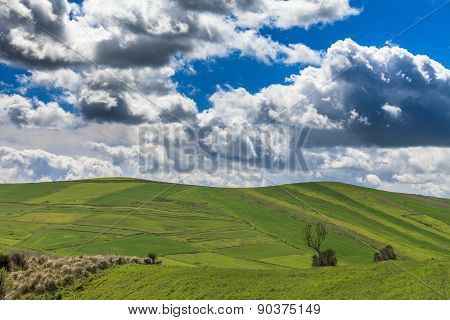 Green Meadows, Trees, Clouds And Sky