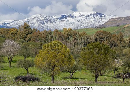Trees And Mountain Snow