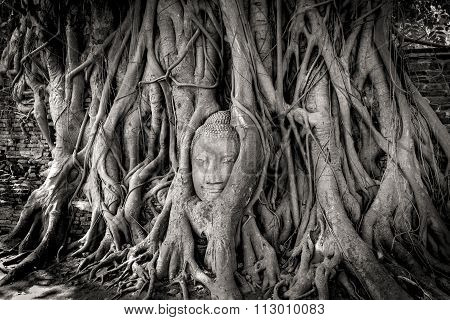 Buddha Head In Tree Branches