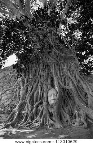 Buddha Statue Head In Tree Branches