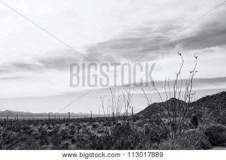 View Of The Arizona - Sonaran Desert And The Mountains Beyond In Monochrome