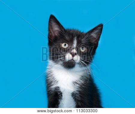 Black And White Kitten Sitting On Blue