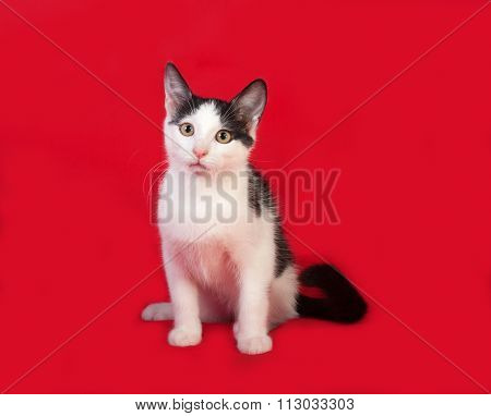 Black And White Kitten Sitting On Red
