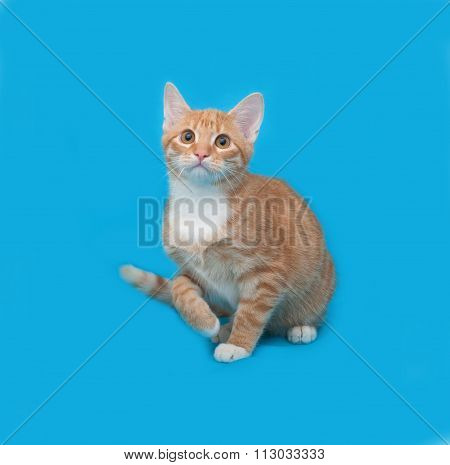 Red And White Striped Cat Sitting On Blue