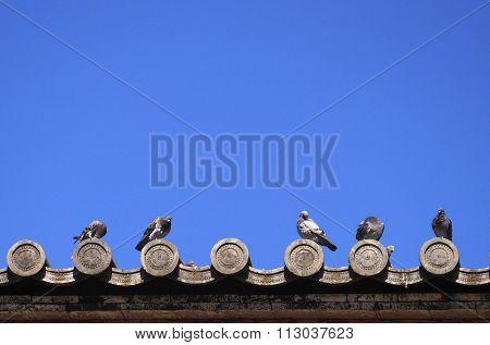 Pigoens On Japanese Temple Roof