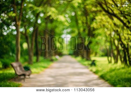 Blurred abstract bokeh bakground of Walkway Lane Path With Green