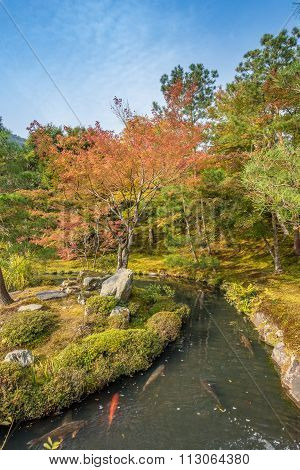 Japanese Gardeno In Early Autumn In Kyoto