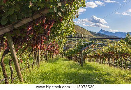 farm wine production