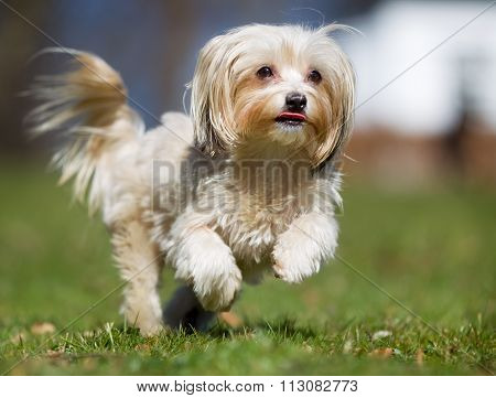 Dog Running Outdoors In Nature