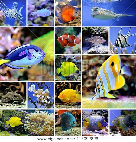 Collage Of Underwater Photos