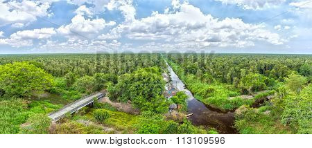 Melaleuca forests in U Minh Overview