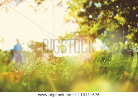 Backyard blurred image