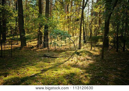 Old World War Trenches In Forest Since Second World War, Belarus