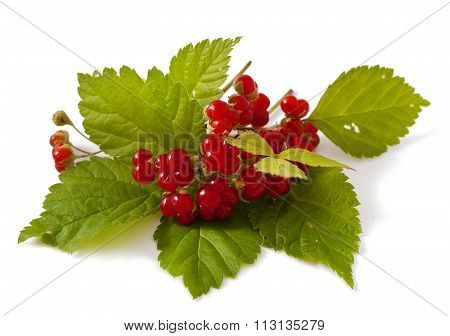 Ripe Stone Bramble berry