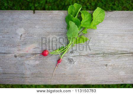 Fresh spring reddish