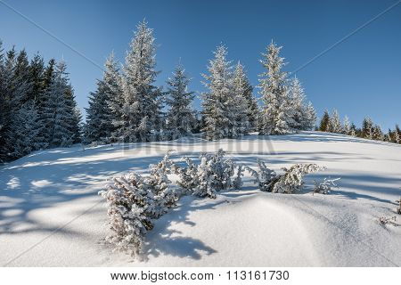 Winter Landscape With Forest