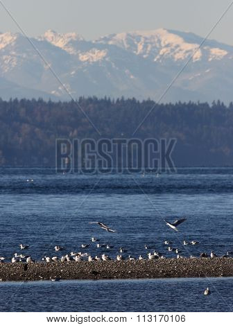 Puget Sound and Olympic Mountains