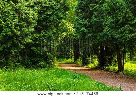 Path In Summer City Park