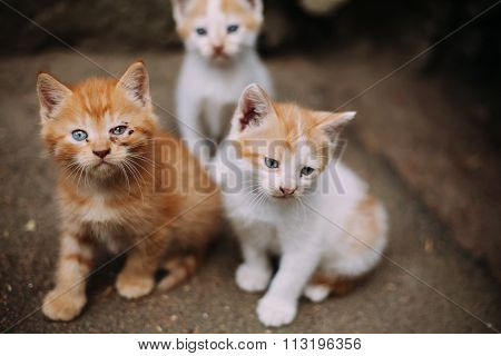 Cute homeless sick kittens on street in summer