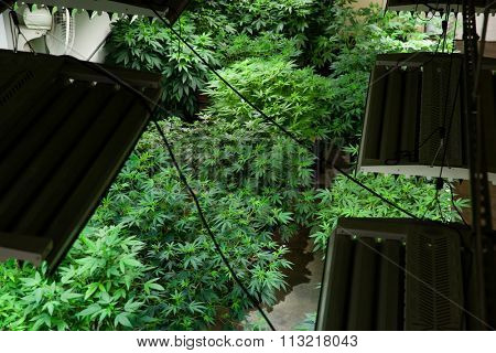 Indoor grow room from above