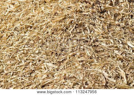 Corn Husks Dry - Corn Crumb Crust In A Corn Field