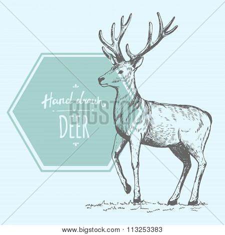 Handdrawn_deer