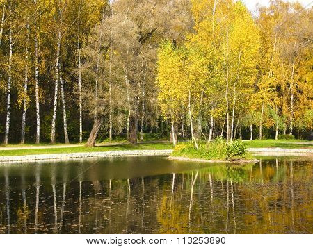 Autumn landscape - little island with yellow birch trees on lake recorded in park Sokolniki in Moscow.