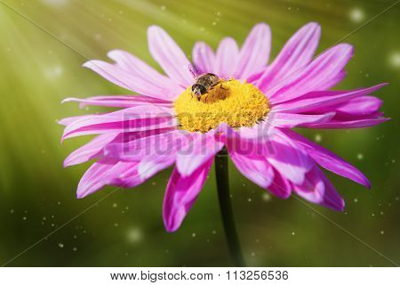 Fly sitting on a flower.