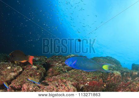 Coral reef Tropical fish underwater ocean