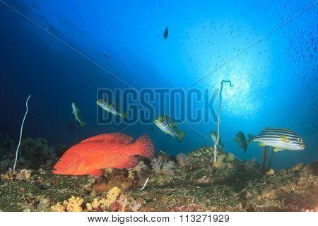 Beautiful coral reef underwater scene with Grouper and Oriental Sweetlips fish in ocean