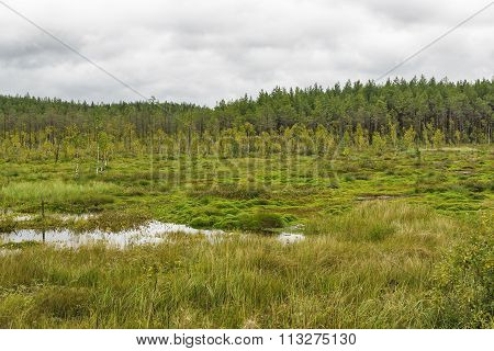 swamp and forest