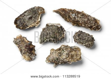 Fresh raw pacific oysters on white background
