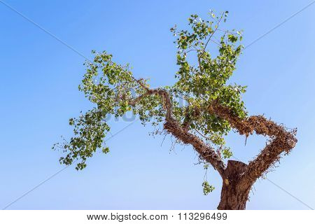 Tree With Foliage Separately Against The Sky