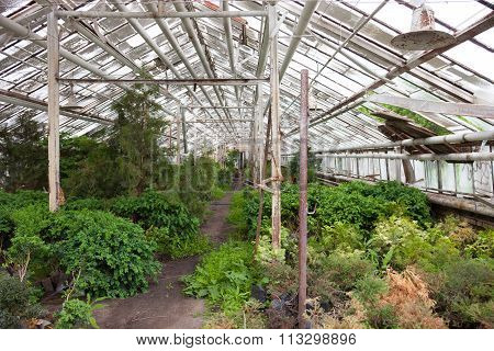 Growing The Plants In The Greenhouse