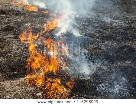 Big Fire In The Field.