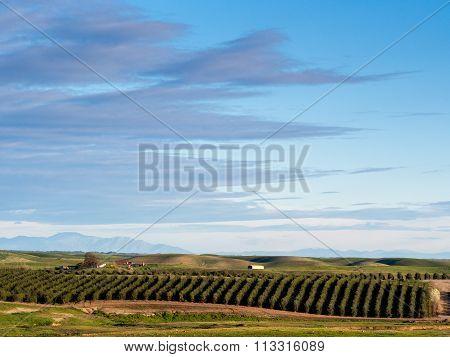 Rural agricultural landscape