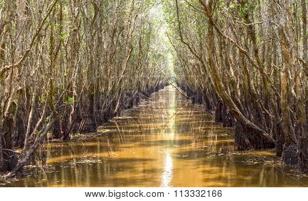 Melaleuca forests untouched path on canal