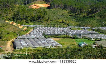 Dalat Flower Village, Vietnam, High Tech Agriculture