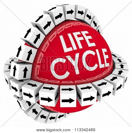 Lifecycle word on a sphere with cubes around it to illustrate a period of time or duration in the life of a product or system