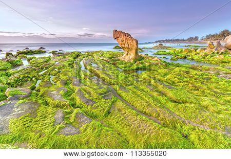 Beach moss dawn Co Thach