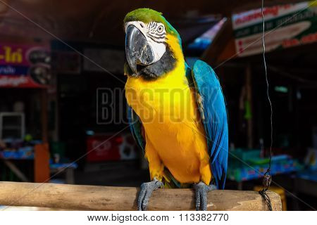 The Colorful Of Macaws