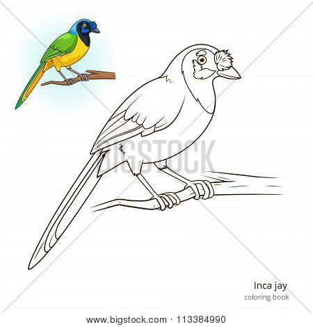 Inca jay bird coloring book vector