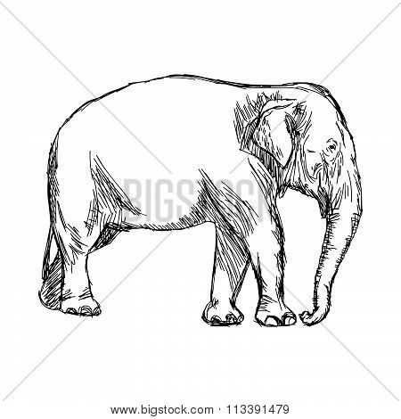 Illustration Vector Hand Drawn Doodle Asian Elephant Isolated On White